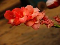 Zatarty pomarańczowy kwiat Obrazy Royalty Free