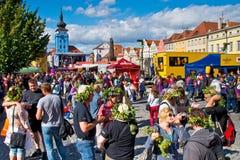 ZATEC镇,捷克- 2015年9月5日:人们用蛇麻草 免版税图库摄影