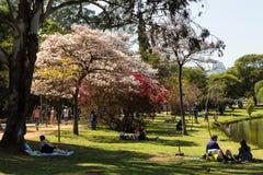 Zaterdag in het park Royalty-vrije Stock Afbeelding