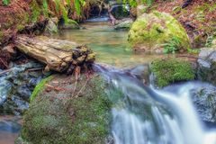 zatoczka las Obrazy Royalty Free
