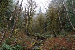 Zatoczka po środku lasu Fotografia Stock