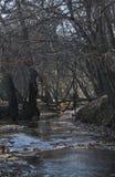 Zatoczka w drewnach Obrazy Royalty Free