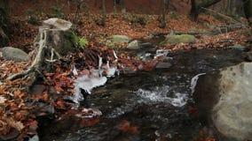 zatoczka w jesień lesie zbiory wideo