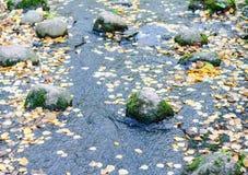 Zatoczka z skałami i spławowymi żółtymi liśćmi zdjęcia royalty free