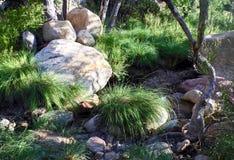 Zatoczki łóżko, rewolucjonistki konserwaci Rockowy Krajowy teren, Nevada obraz stock