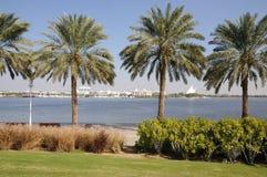 zatoczki Dubai drzewka palmowe obrazy royalty free