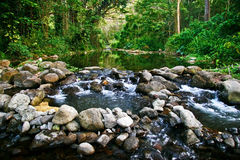 zatoczki Hawaii dżungla Obrazy Stock