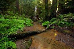 zatoczki lasu bujny zdjęcie royalty free