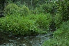 Zatoczki spływanie w lesie Zdjęcie Stock