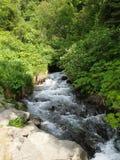 zatoczki tropikalny las deszczowy Zdjęcia Stock
