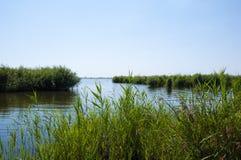 zatoka Dzień piękna zatoka w Ukraine z zieloną trawą blisko wody rzecznej lato i speing sezon natury envir i ekologia obraz stock