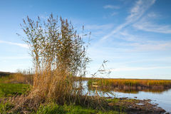 zatoka finlandia nabrzeżny equense krajobrazu mety Sorrento vico Fotografia Royalty Free