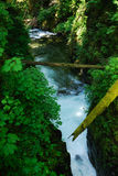 zatoka lasów deszczowych Zdjęcie Stock
