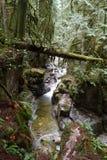 zatoka las Zdjęcie Stock