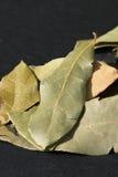 Zatoka liści łupek Obrazy Royalty Free
