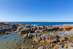 Zatoka ogienie Turkus nawadnia z pomarańczowym liszaju dorośnięciem na grą Zdjęcia Stock