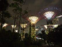zatoka uprawia ogródek super drzewa Obraz Royalty Free