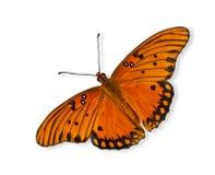 Zatoki Fritillary motyl (Agraulis vanillae) Obrazy Royalty Free
