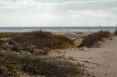Zatoki wybrzeża rośliny zdjęcia royalty free