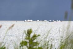 Zatoki wybrzeże, łodzie z białymi żaglami w morzu na horyzoncie Fotografia Stock