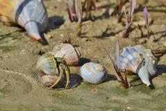 Zatoki wybrzeża Seashells fotografia royalty free