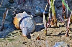 Zatoki wybrzeża Seashells IV Zdjęcie Royalty Free