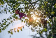 Zatrzymuje padać lalę hanking na drzewie Fotografia Stock