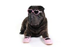 Zauber-Hund in den Gläsern Lizenzfreies Stockfoto