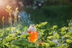 Zaubertrank in der Flasche im Freien Stockfotografie