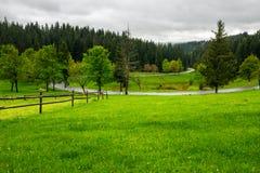 Zaun auf Wiese nahe Wald Lizenzfreies Stockfoto