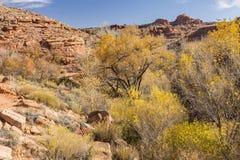 Zaun Canyon Autumn Color stockfotos