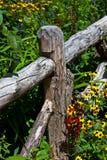 Zaun in den wilden Blumen Stockfotografie