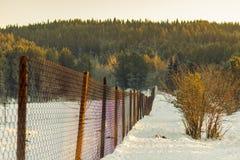 Zaun der Metallmasche Lizenzfreie Stockfotografie