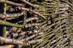 Zaun der Zweige Lizenzfreie Stockfotografie