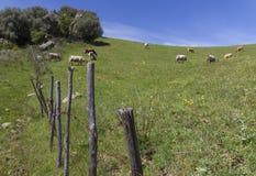 Zaun Farm Lizenzfreies Stockbild