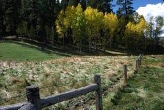 Zaun, Herbst 272-1.13 Stockfotos