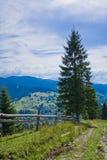 Zaun im Wald Lizenzfreies Stockfoto