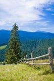 Zaun im Wald Stockfoto