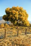 Zaun mit Baum stockbilder