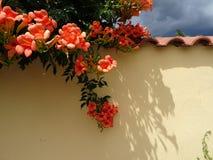 Zaun mit Blumen lizenzfreies stockbild