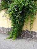 Zaun mit Blumen lizenzfreie stockfotos