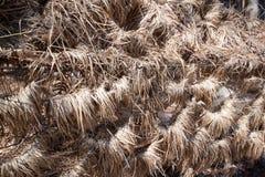 Zaun mit dem getrockneten Gras durchgebrannt und auf es gefegt Stockbild