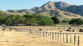 Zaun mit Kühen in Costa Rica Lizenzfreie Stockfotografie