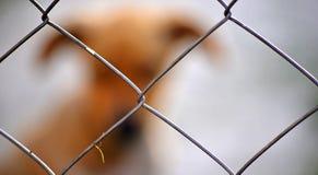 Zaun mit Schattenbild des Hundes Stockfotos