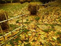 Zaun Poles Stockbilder