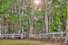 Zaun und Bäume Stockbilder
