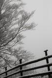 Zaun und Baumlandschaft während des Winters Stockfotos