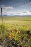 Zaun und Blumen 1 Stockfoto