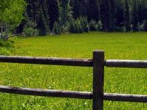 Zaun und Feld der gelben Wildflowers Stockfotografie