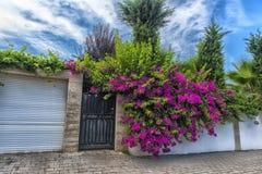 Zaun und rosa Blumen Stockfotografie
